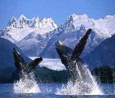 Whales in Alaska