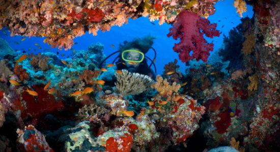 diving-582×368